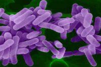 Фотография под микроскопом вируса